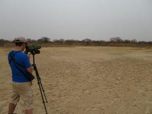 Olivier au Sénégal